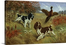 Energetic English springer spaniels flush a bird from its cover.