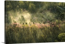 Fog rising over freshly budding and blooming trees in the spring
