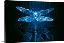 Imagery of a dragonfly in a wind tunnel