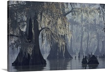 Lake Verret, Atchafalaya National Wildlife Refuge, Louisiana