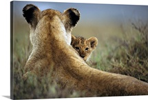 Lioness and cub, Ngorongoro Conservation Area, Tanzania