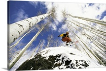Looking up as a snowboarder jumps off a rock enveloped in trees