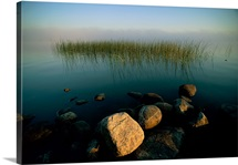 Marsh grass and rocks seemingly float in a mist covered body of water