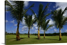 Palm trees at the Hard Rock Golf Course in Punta Cana