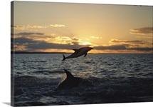 Patagonian Coast, Argentina