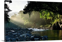 Rays of sunlight shining on a stone-filled creek in a woodland setting, Pacific Islands