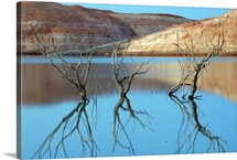 Reflections of cottonwood tree branches in Halls Creek Bay, Glen Canyon National Recreation Area, Utah