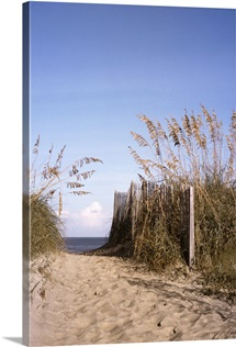Sea oats line the path to the beach on the Outer Banks