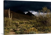Storm clouds loom over desert landscape and Ajo Mountains