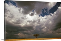 Storm front and Acacia trees, Masai Mara National Reserve, Kenya