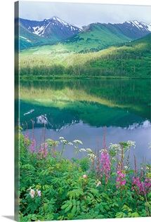 Summit Lake, sunbeam on forest and lake, fireweed and parsnip, Chugach National Forest, Alaska