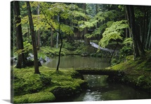 The Saihoji garden is covered with some 120 varieties of moss, Honshu Island, Japan