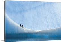 Two chinstrap penguin chicks rest on the side of a large iceberg