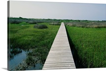 Walkway above wetlands, Cape Lookout National Seashore, Outer Banks, North Carolina