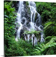 Waterfall cascading over rocks in a lush forest, Nyungwe Forest National Park, Rwanda