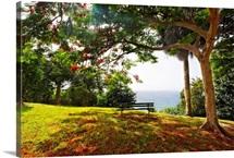 Bench Under a Flamboyan Tree, Borinquen Point, Puerto Rico
