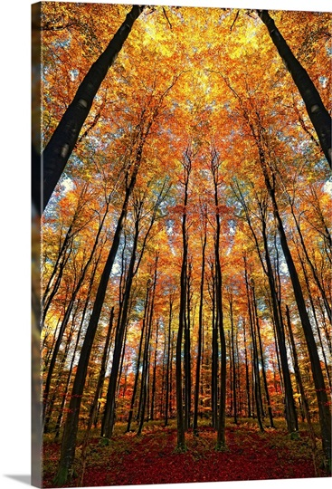 Cathedral Fall Photo Canvas Print Great Big Canvas