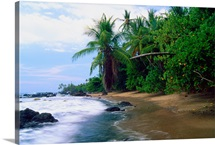 Jungle Meets the Pacific Ocean, Corcovado National Park, Costa R