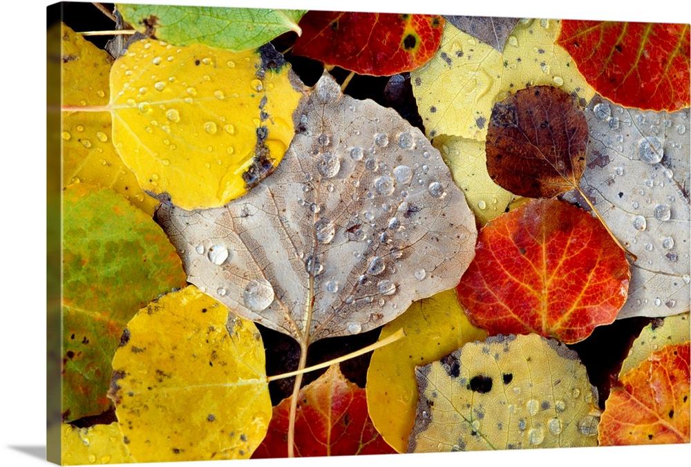 Leaves Dew Drops