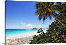 Palm Shaded Caribbean Beach, Trunk Bay, St John, US Virgin Islan