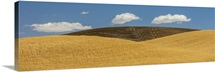 Palouse, Washington I