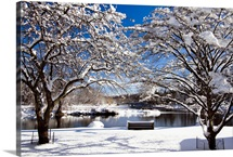 Snow Covered Trees, Winter Scenic, South Branch of Raritan River