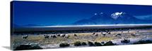 Altiplano Andes Chile