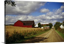 Amish farm buildings and corn field along country road, Ohio