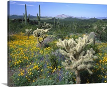Arizona, Organ Pipe Cactus National Monument