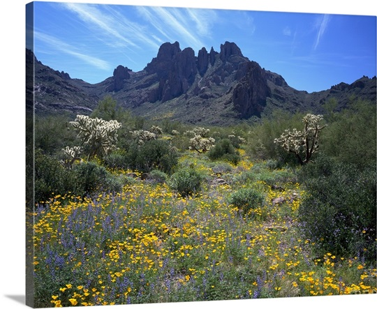 Arizona, Organ Pipe Cactus National Monument, Wildflowers on the mountain