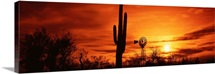 Arizona, Sonoran Desert, sunset