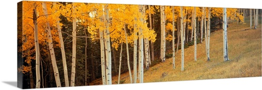 Aspen Grove Ouray CO