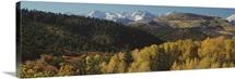 Aspen trees in autumn, Rocky Mountains, San Juan National Park, Colorado