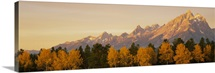 Aspens Teton Range Grand Teton National Park WY