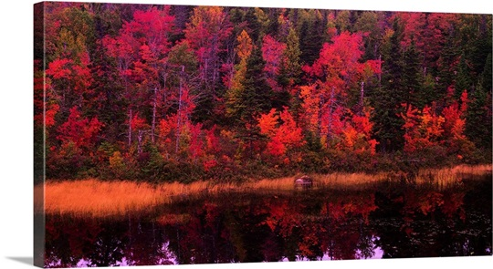 Autumn Forest Newfoundland Canada