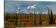 Autumn tundra and spruce trees, Mt McKinley, Denali National Park, Alaska