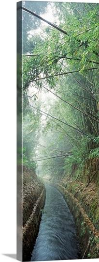 Bamboo Waimea HI