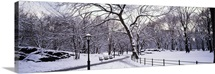 Bare trees during winter in a park, Central Park, Manhattan, New York City, New York State
