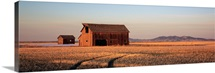 Barn in a field, Hobson, Montana
