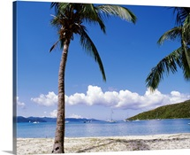 British Virgin Islands, Jost Van Dyke Island, Great Harbour, Palm trees at the seashore