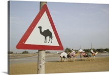 Camel crossing sign on a racing track, Al Marqadh, Dubai, United Arab Emirates