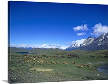 Chile, Torres Del Paine National Park, Aerial view of llamas grazing in a meadow