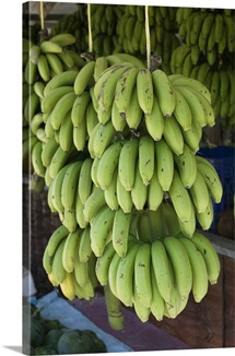 Close-up of bunch of bananas, Salalah Beach, Salalah, Dhofar, Oman