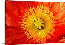 Close up of red and yellow flower