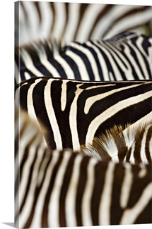 Close-up of stripes on Zebras, Masai Mara National Reserve, Kenya