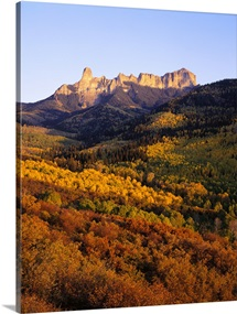 Colorado, Uncompahgre National Forest, Cimarron Ridge, Panoramic view of a dense forest in the landscape