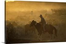 Cowboy Queensland Australia