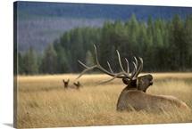 Deer WY