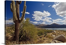 Desert scene with saguaro cactus, Bartlett Lake, Tonto National Forest, Arizona
