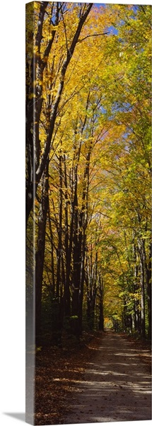 Dirt road passing through a forest, Sleeping Bear Dunes National Lakeshore, Empire, Michigan